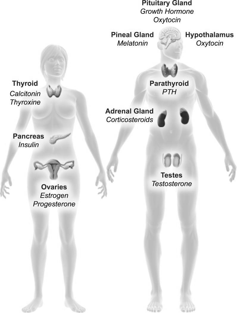 endocrine disruptors - environmental toxins