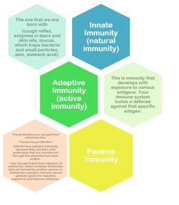 innate adaptive passive immunity breastfeeding breastmilk