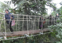 Eden bridge 1