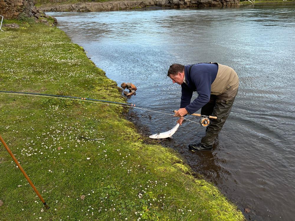 Landing Salmon on Blanda River Iceland