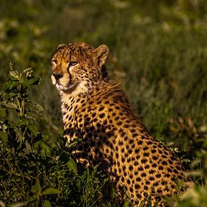 Tanzania, Africa Wildlife Safari