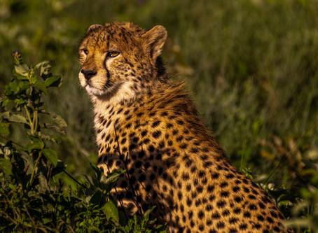 Wilderness Travel's Tanzania Wildlife Safari 02/06 - 02/23/2020