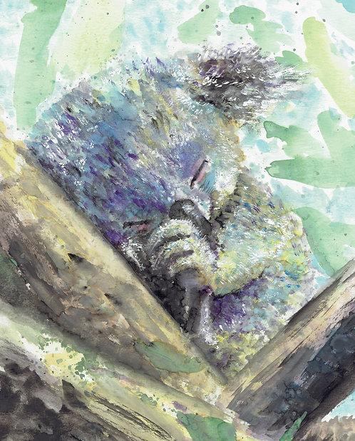 Koala Watercolor Art Print   |   Animals