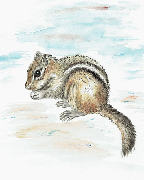 Chipmunk Watercolor Art Print   |   Animals