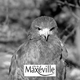 Effarouchement Natur'Ailes Maxéville