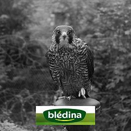 Effarouchement Natur'Ailes Blédina