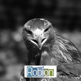 Effarouchement par la fauconnerie à Robion