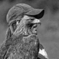 Cyril Leseul Fauconneri Natur'Ailes
