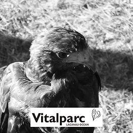 Vitalparc