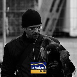 Effarouchement La Valette du Var par la fauconnerie