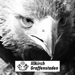 Effarouchement-Illkirch.jpg