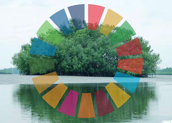 Mangrove ODS