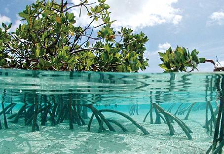 Blue Carbon - Reforest the Oceans