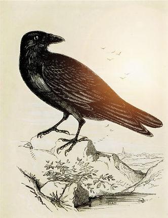 home design blog, south florida, design raven