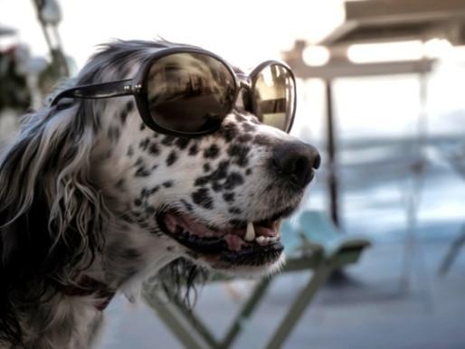 DOGGIE DIGS: Miami's best dog-friendly hotels
