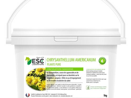 CHRYSANTELLUM AMERICANUM ESC Laboratoire