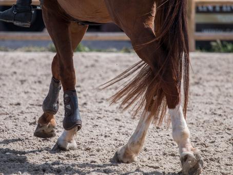 Les molettes chez le cheval