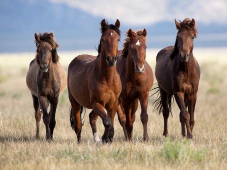 Le système immunitaire de mon cheval