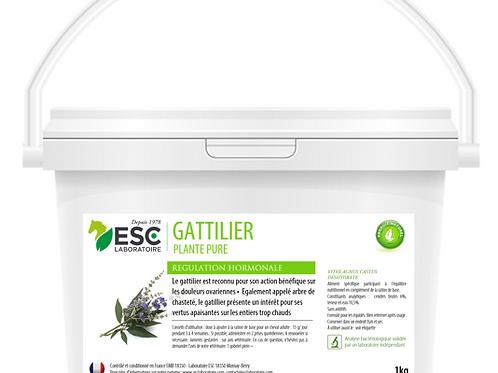 GATTILIER ESC Laboratoire