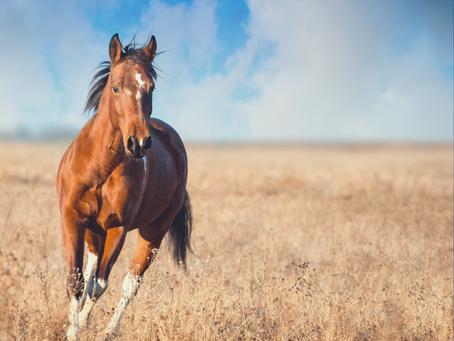 Mon cheval a-t-il besoin d'un drainage ?