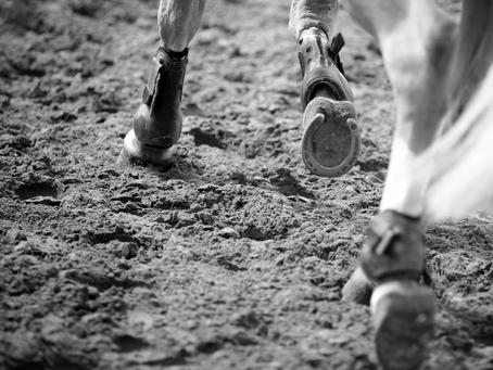 Comment soutenir le système locomoteur de votre cheval ?