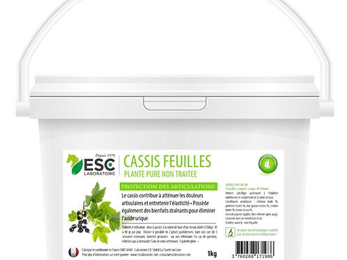 CASSIS ESC Laboratoire
