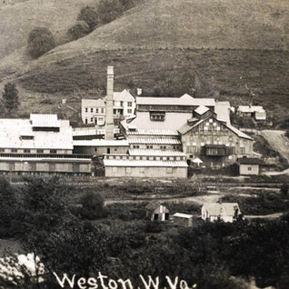 A close up of the second plant in September of 1913.