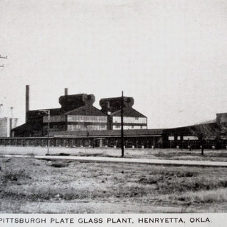 Another photo of the plant.