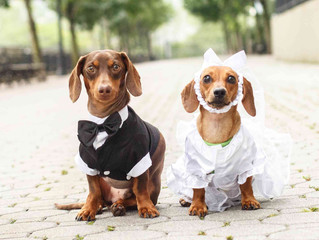 Incorporating Pets in Your Wedding