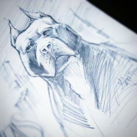 #auksone #blue #pitbull #beastyle #numbe