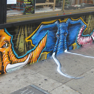 sf-elephants.jpg