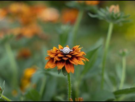 J Engagement Session | Elmhurst Engagement Photographer