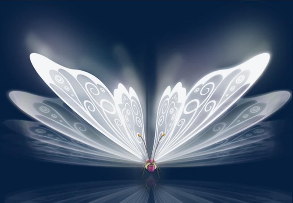 cercle de Papillon