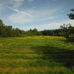 mansfield labyrinth