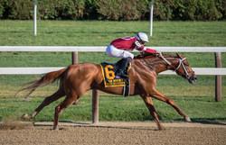 Horse Race keith-luke-527148-unsplash