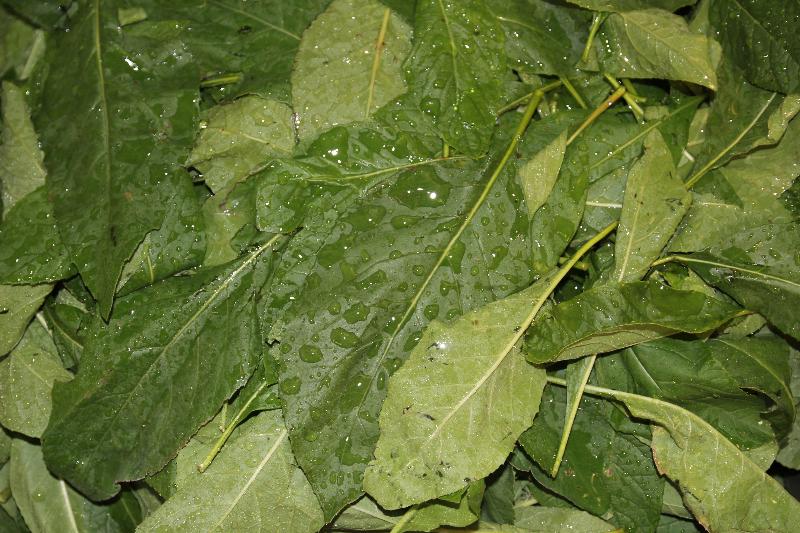 Veau Water - Healthy Drink - Leaves