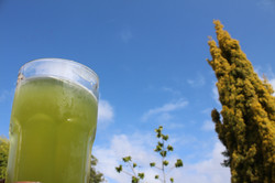 Veau Water Green Drink in Nature