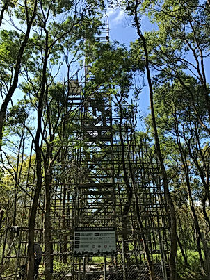 DNDF flux tower.jpg