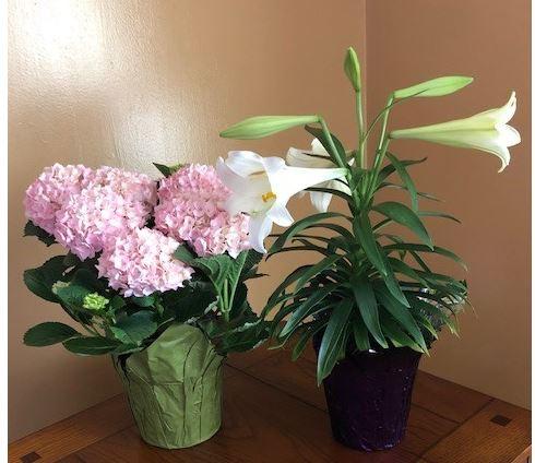 Frederickson Easter Plants