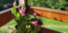 Flores na varanda.jpg