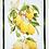 Thumbnail: LIMONCELLO limone