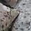 Thumbnail: Drap SYBILLE Coton Gr. Fleurs - La Girafe Bleue et Tessitura Toscana Telerie