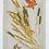 Thumbnail: MUESLI amaranto