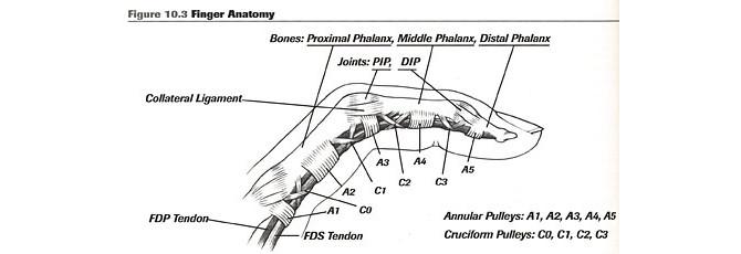injury-a2-finger-anatomy-1.jpg