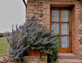 Villa Buoninsegna _ Lavander