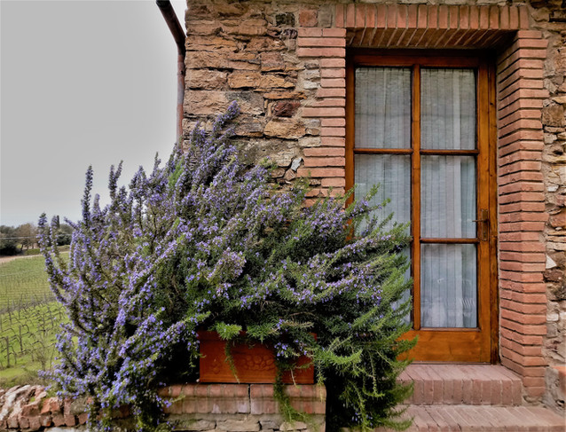 Villa Buoninsegna | Tuscan Lavander