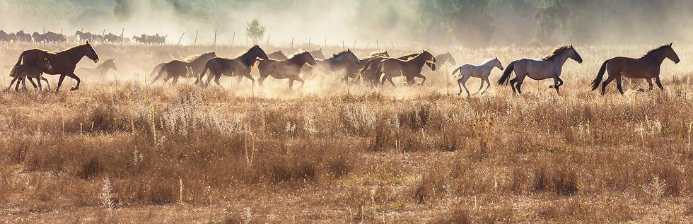 horse-AE567UZ.jpg