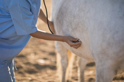 vet horse
