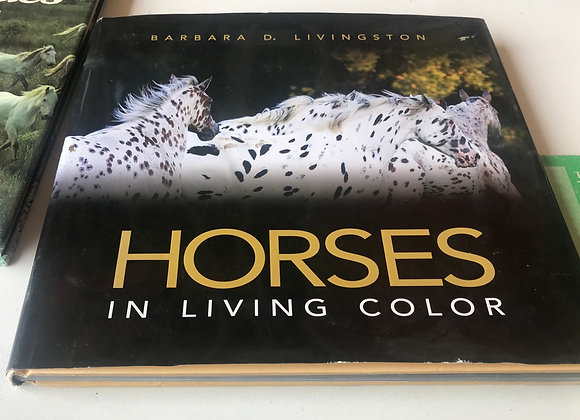 Horses In Living colour
