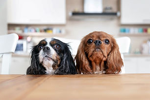 two-dogs-behind-the-kitchen-table-4GCM5F